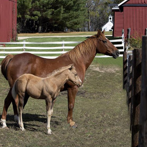 Veterinarian in Fairbury, NE - Equine Reproduction